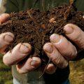 آیا خاک میتواند کره زمین را نجات دهد؟